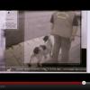 Internacional Detector Dogs Team (IDDT)